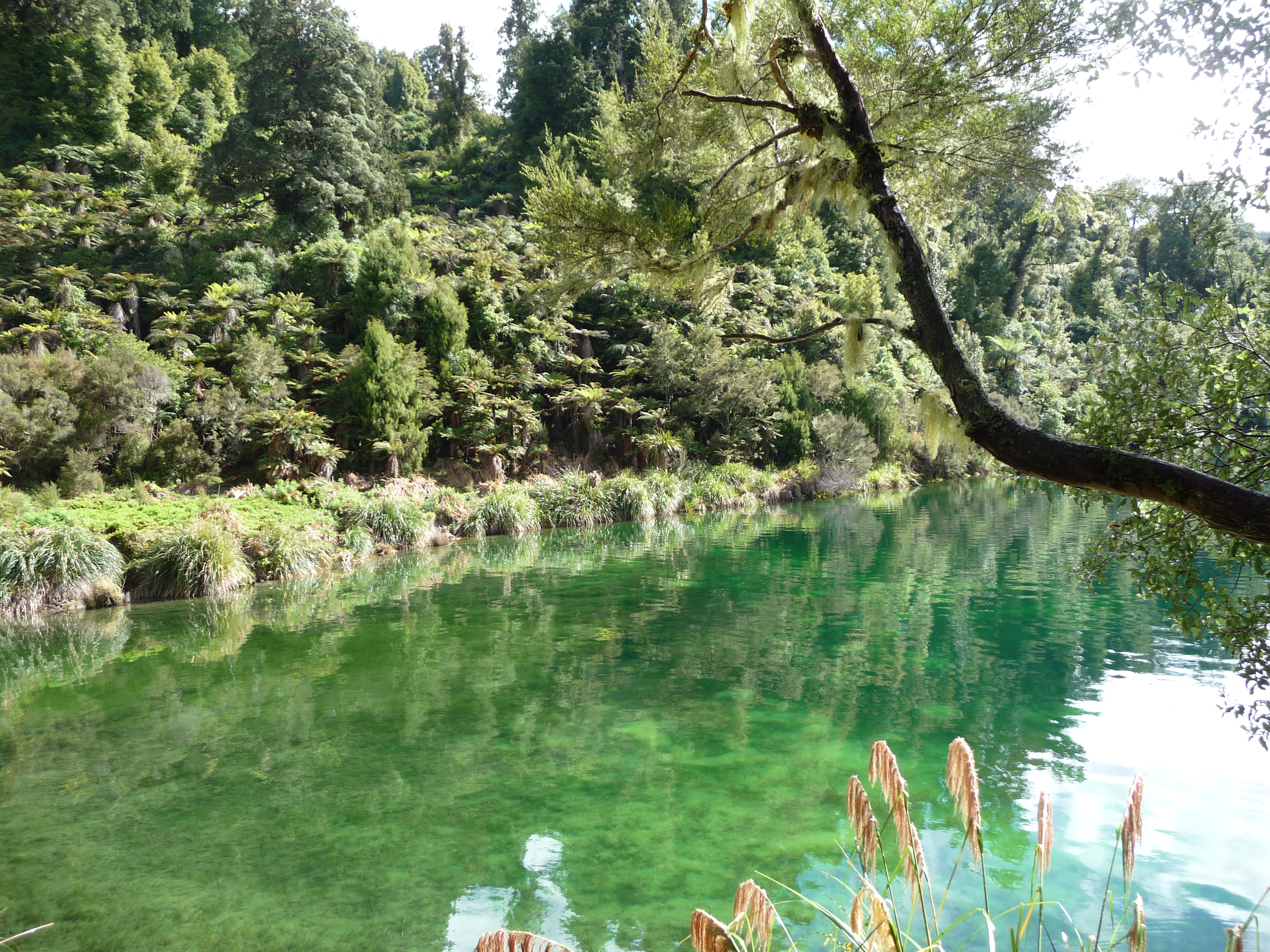 Lake Waikaremoana Great Walk – The Wandering Historian
